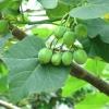 Imagen de planta
